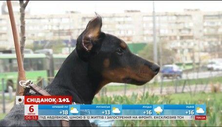 В Україні за жорстоке поводження із тваринами саджатимуть за ґрати