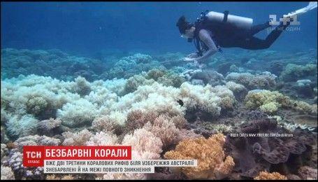 В Австралии Большой Барьерный риф оказался под угрозой исчезновения