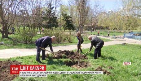 В Одесі з'явилася власна алея сакур