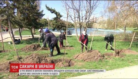 В Украине в честь года Японии посадят около 2,5 тысяч сакур