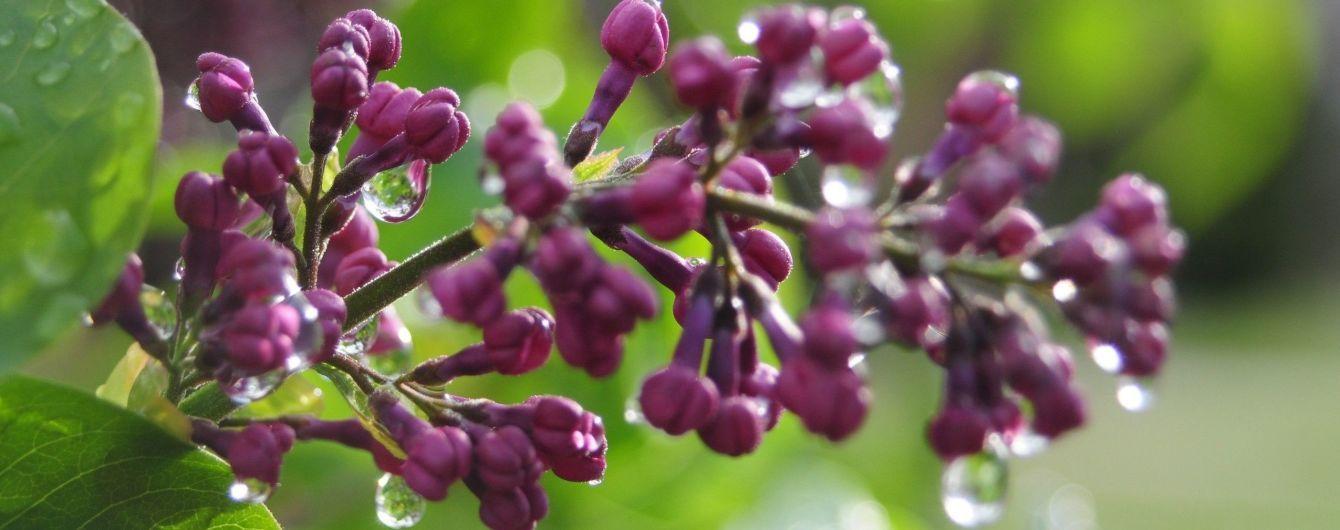 В Україні пройдуть дощі з грозами та шквалами. Прогноз погоди на 14 травня