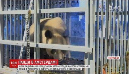 Китай подарил Нидерландам две гигантские панды