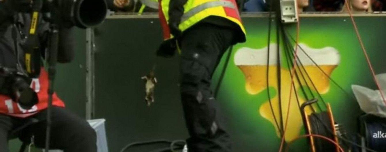 Во время матча в Дании фанаты забросали футболистов соперника мертвыми крысами
