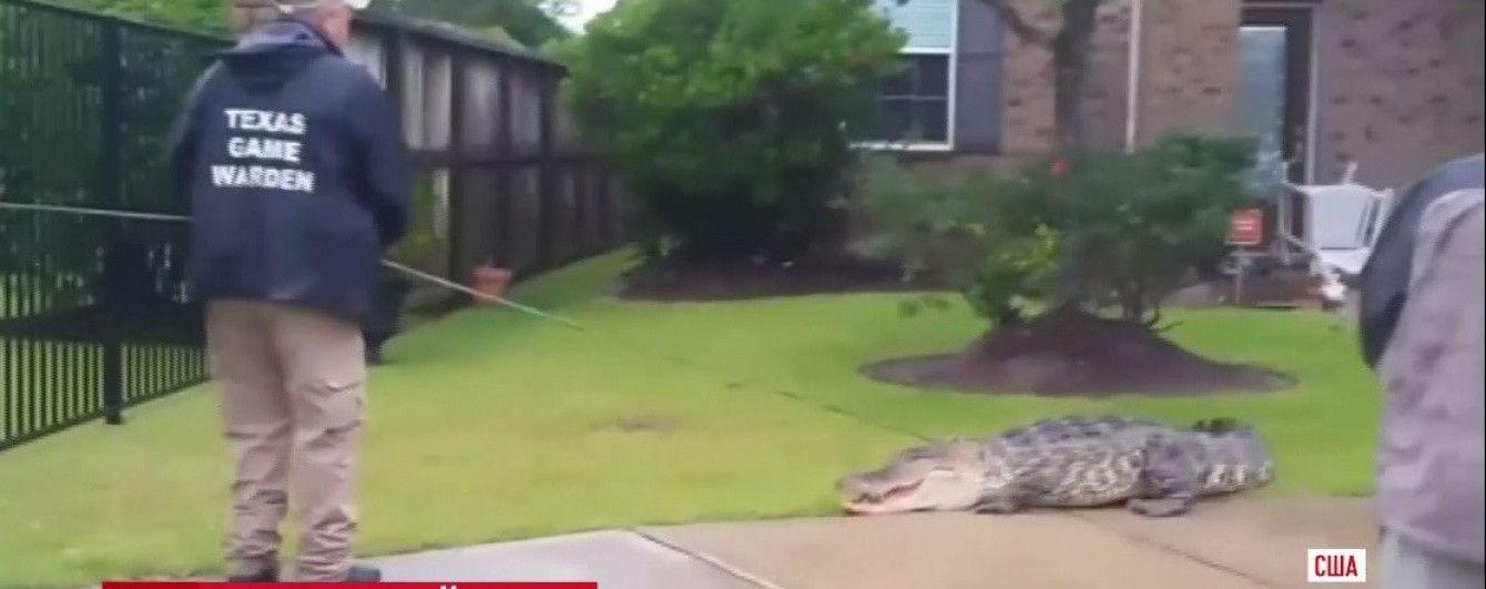 У двір до американської родини вдерся 90-кілограмовий алігатор