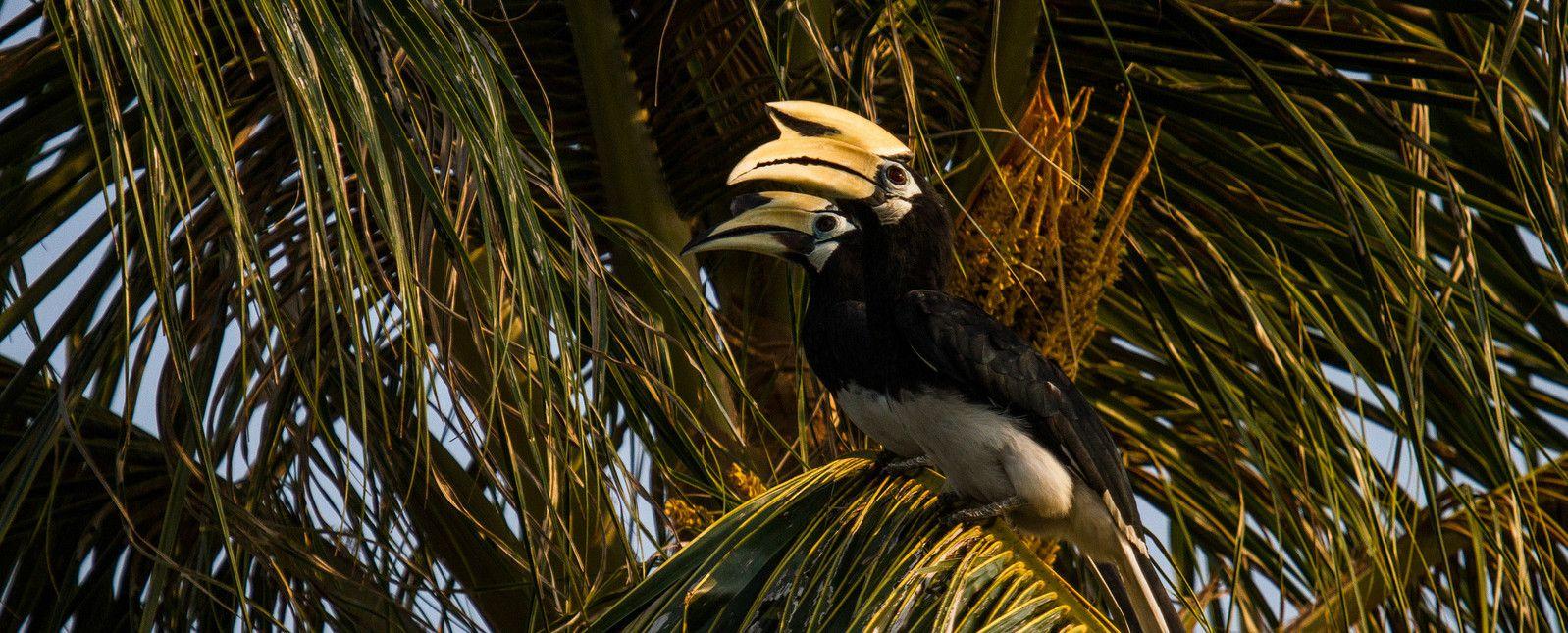 02. Острів Пангор, Малайзія