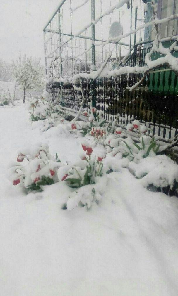 Сніговий армагедон дістався Одещини