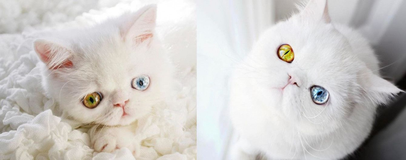 Кошка с космическими глазами и Instagram фитнес-красотки, которая одолела рак. Тренды Сети