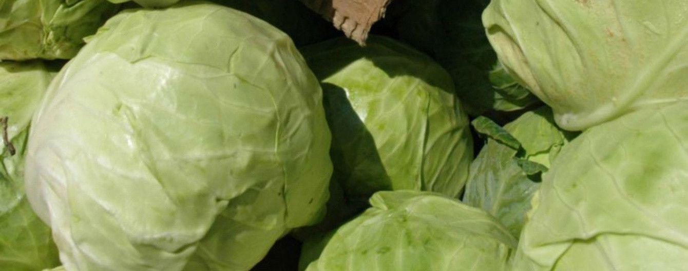 У продажу різко впали ціни на молоду капусту