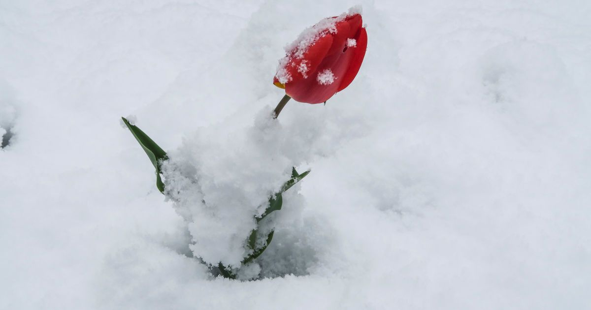 Снігопад в Австрії @ Reuters