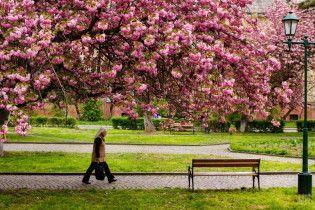 Умершие украинцы превратятся в деревья. В Раде появился законопроект о биозахоронении