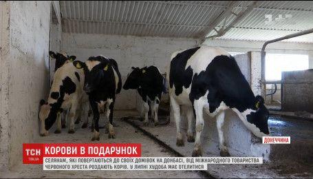 Людям, которые возвращаются в свои дома на Донбассе, начали раздавать скот