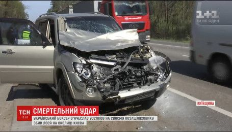 Боксер Узелков сбил лося на окраине Киева