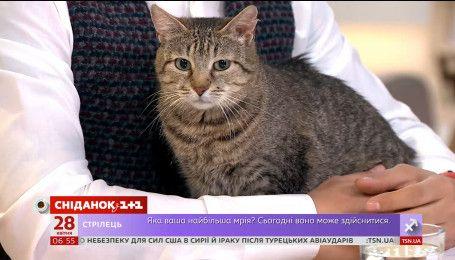 Кошка Анжела ищет семью