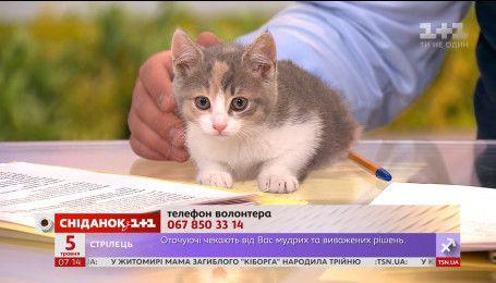 Кошечка Эрика ищет семью