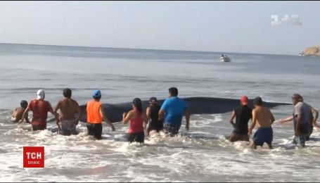 В Мексике несколько десятков человек пытались спасти 40-тонного кита