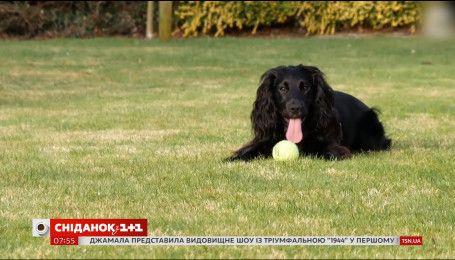 В Британии живет кошачий детектив-собака