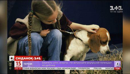 Учені довели, що собаки допомагають дітям пережити стрес