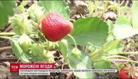 В Киеве клубнику продают по 100 за килограмм
