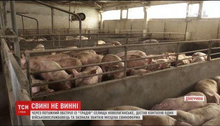 Из-за мощного обстрела поселка Новолуганское убытки понесла местная свиноферма