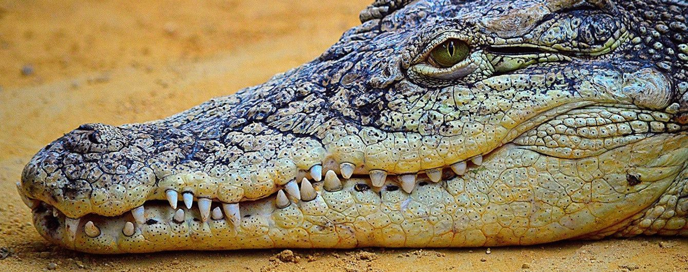 Зоозащитники ополчились против Хмельницкого бутика, который выставил в витрине крокодилицю