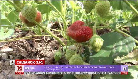 Как весенние морозы отразятся на ценах на овощи и фрукты
