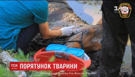 Американские спасатели несколько часов вытаскивали из болота 25-летнего коня