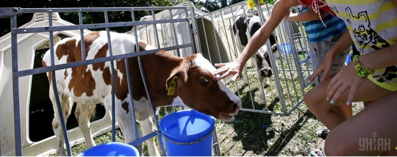 """В Украине хотят запретить продажу """"домашнего"""" молока"""
