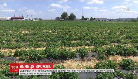 Весенние заморозки могут лишить Украину урожая