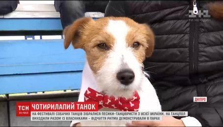 Собачий фестиваль танців відбувся у Дніпрі