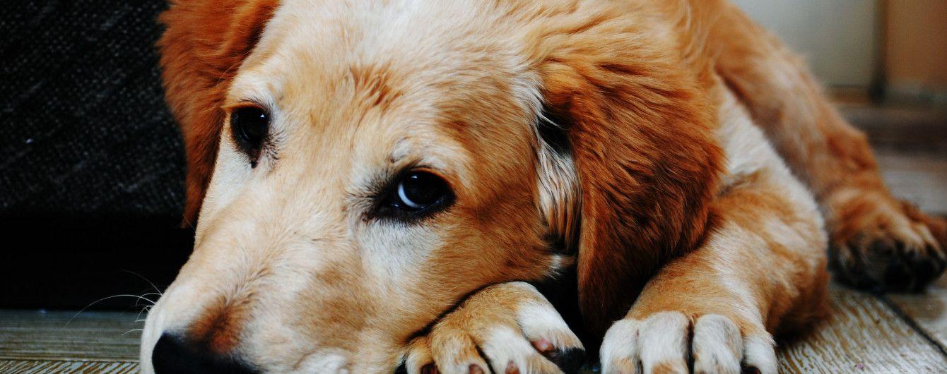 У Маріуполі господар своїм тілом прикрив собаку від куль агресивного водія