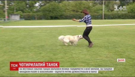 На фестивалі собачих танців у Дніпрі зібралися песики-танцюристи з усієї України