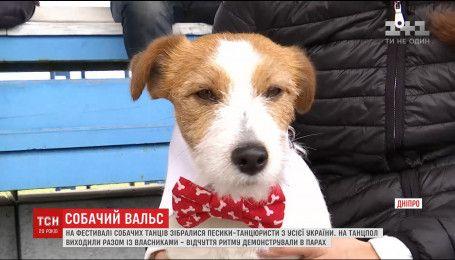 Песики з різних міст взяли участь у фестивалі собачих танців у Дніпрі