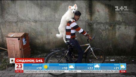 У Києві відбудеться велопробіг із собаками
