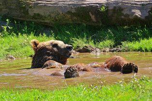 Под Житомиром открыли приют для медведей, которых спасли от издевательств
