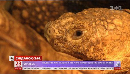 Що треба знати про догляд за черепахою