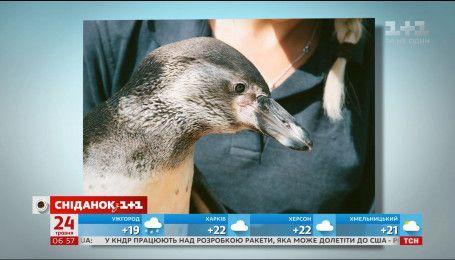 Одинокий пингвин ищет подружку через сайт знакомств