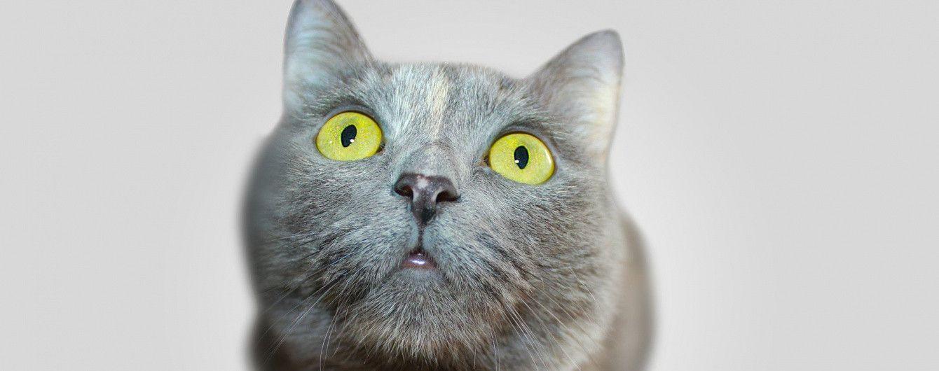 Кидав з вікна та тримав в морозилці кошеня: лучанин-живодер загримів за ґрати на 5 років