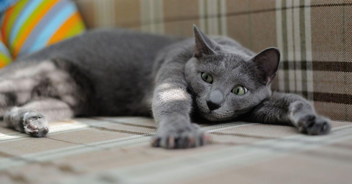 В одному з районів Харкова запровадили карантин через скаженого кота  (1.02 8) 3b00656483dfc