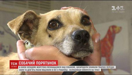 Ветеринары спасли собаку, которой живодеры сломали лапы и 9 раз выстрелили из ружья