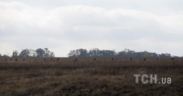 """Десятки бойовиків та БТРи. Як """"ДНРівці"""" повернули сили до Петровського"""