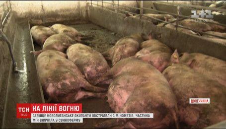 В Новолуганском боевики обстреляли свиноферму, на которой работают люди с обеих сторон фронта