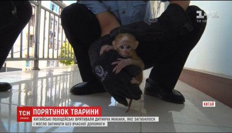 Китайські поліцейські врятували на узбіччі дороги маленьку мавпочку