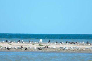 Невідомі курорти Одеської області на Чорному морі та річці Дунай