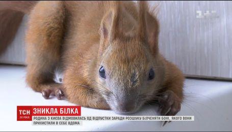 В Киевской области семья устроила расследование с ссорой из-за пропавших домашних белочек