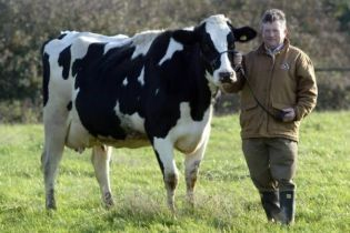 У Британії мультимільйонера вбив власний собака, ненароком задавивши трактором