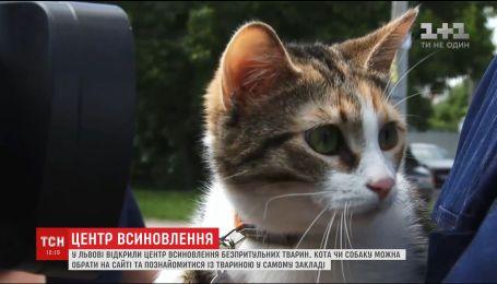У Львові з'явився центр, де обирають господарів для безпритульних тварин