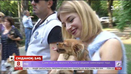 Власники собак відстоюють права своїх улюбленців