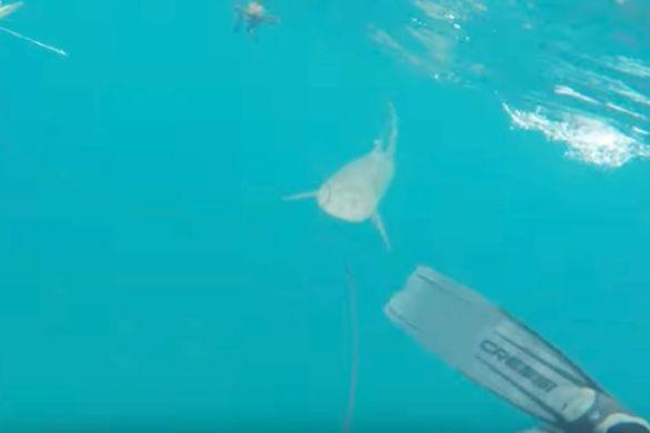 акула, флорида_3