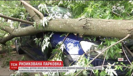 Жители столичной Оболони обвиняют коммунальщиков в падении деревьев на их авто