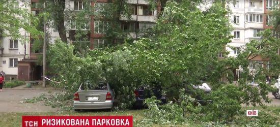 У Києві дерево впало на парковку і розчавило три машини